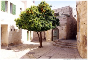 jerusalem-jewish-quarter-beit-el-road-or-nearby-orange-tree-large