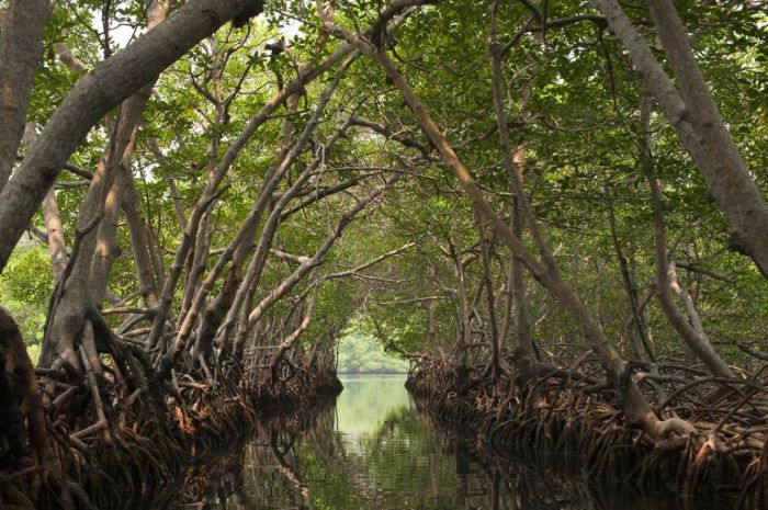 Mangroves-Jadwiga-Figula-Photography-56a5f84d5f9b58b7d0df5259