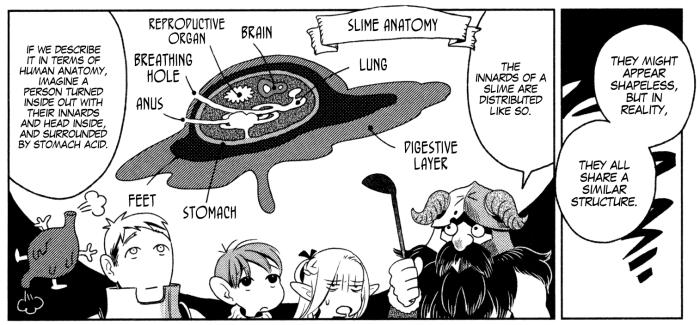 DungeonMeshi Slime Anatomy